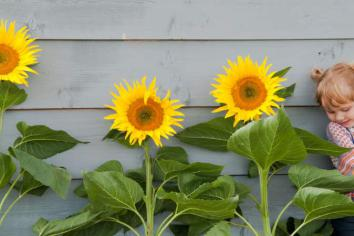 Get your free sunflower seeds and help brighten borough